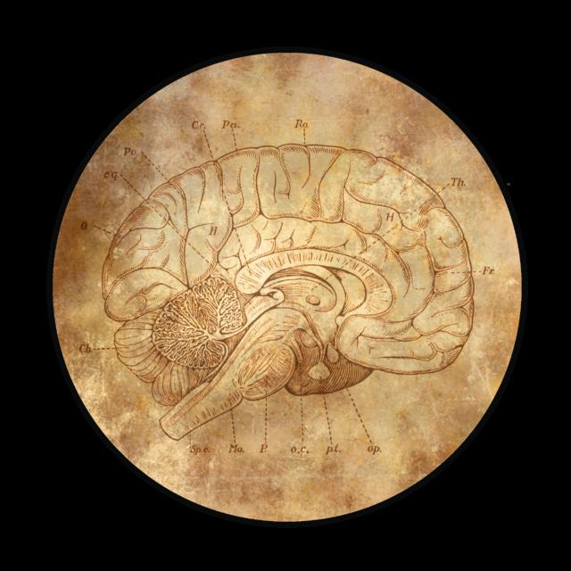 Un viaje al Cerebro de nuestro protagonista...